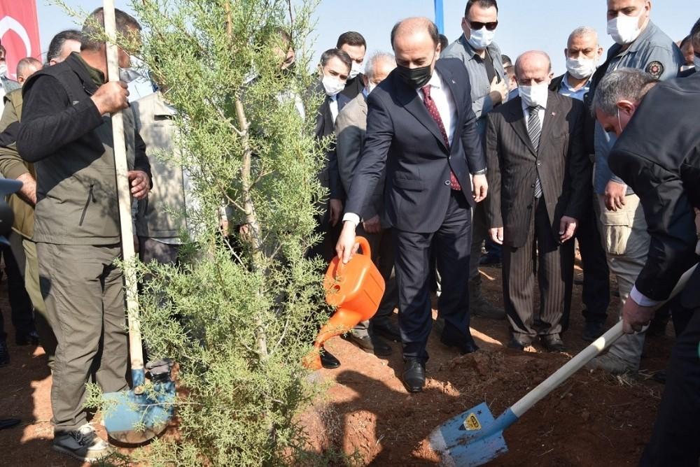Şanlıurfa'da binlerce fidan toprakla buluştu