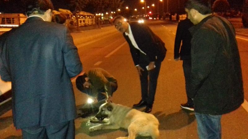 Kazada yaralanan hayvana ilk müdahaleyi Mehmet KUŞ tan geldi.