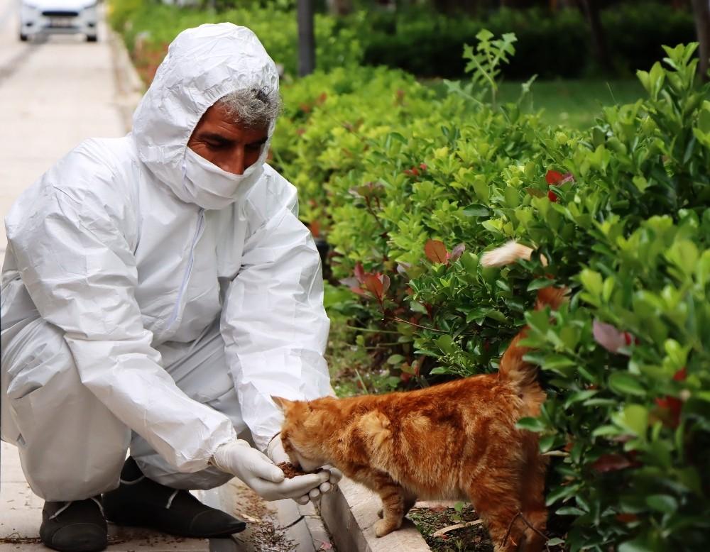 Şanlıurfa'da korona günlerinde sokak hayvanları unutulmadı
