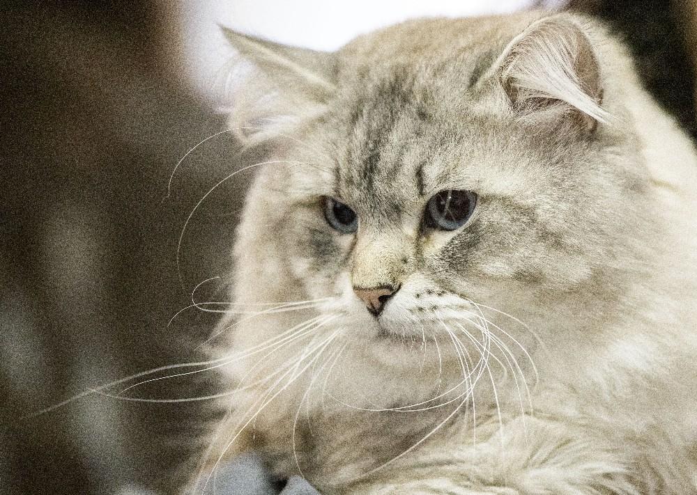İngiltere'de 25 kedinin öldürülmesiyle ilgili bir şüpheli gözaltında