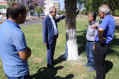 Başkan Demirkol Ağaç Koruma Çalışmalarını Denetledi