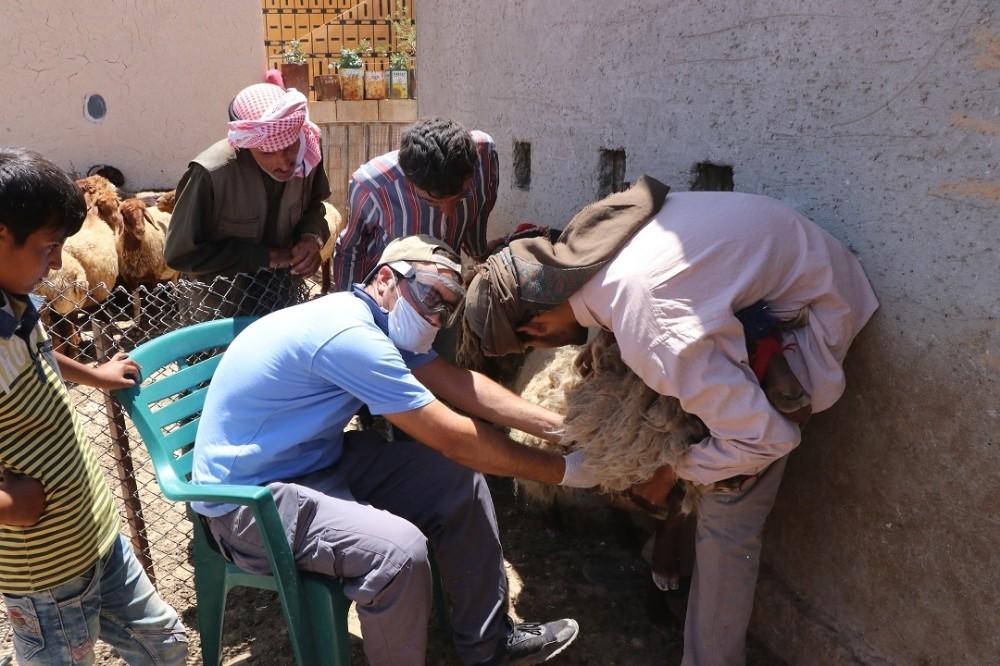 Türk veterinerler Suriye'deki hayvanları aşılıyor