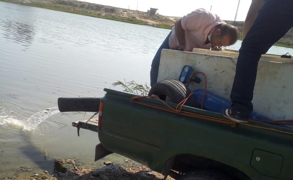 Telabyad'daki göletlere 520 bin yavru sazan bırakıldı