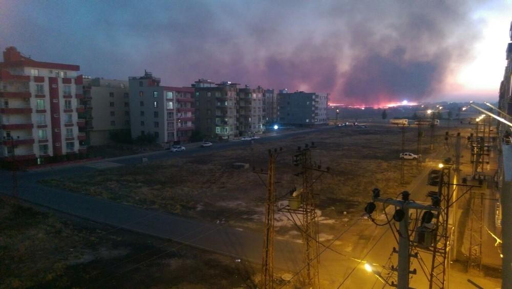 Viranşehir'de anız yangını