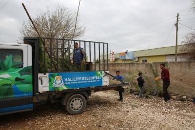 Haliliye'yi yeşillendirme çalışmaları devam ediyor