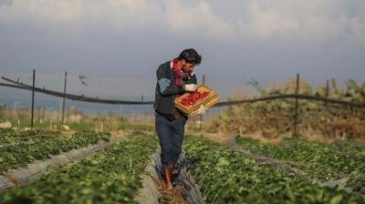İsrail bunu da yaptı! Gazze Sınırına Kimyasal Bıraktı