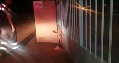 Kapının demir parmaklıklarına sıkışan köpeği itfaiye ekipleri kurtardı