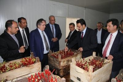 Saraçoğlu: